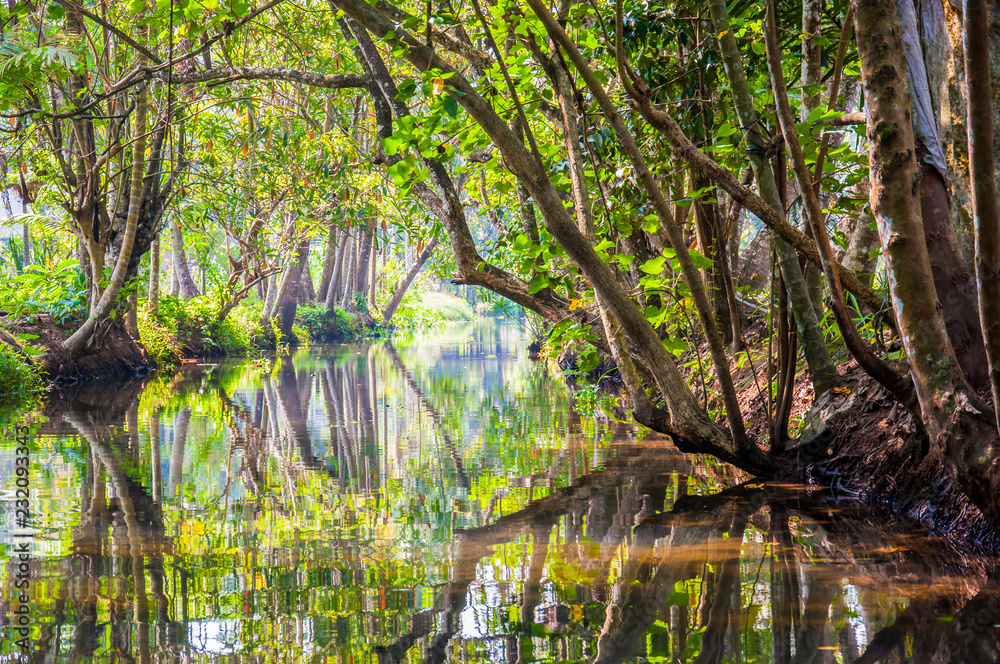 Fototapety, obrazy: Kerala Backwaters meandering jungle river