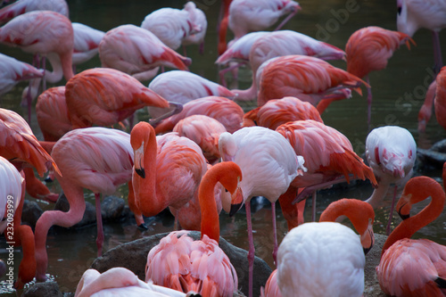 Tuinposter Flamingo フラミンゴ 群れ
