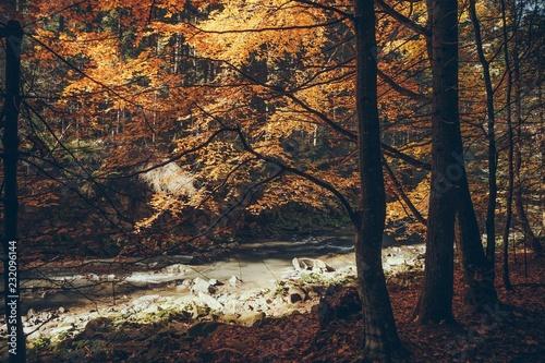 Obraz mountain river in autumnal forest, Carpathians, Ukraine - fototapety do salonu