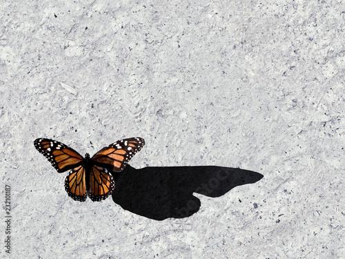 Foto op Plexiglas Stenen in het Zand Butterfly