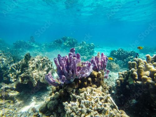 coralli madagascar