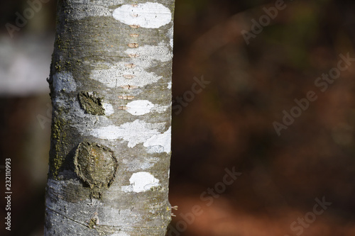 Photo texture ecorce bois foret tronc arbre