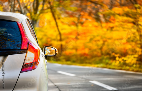 Poster Bleke violet Close Up Tail lamp of The car on the road or gold line in the forest during the autumn season with blur forest and Leaves change color background in travel and transportation concept.