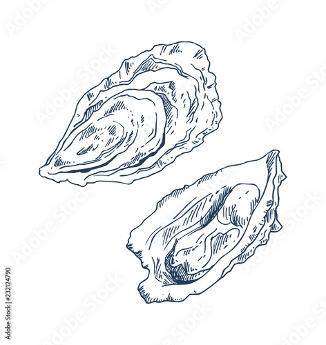 Photo Seafood Delicacy Bivalve Clam Oyster Sketch Poster