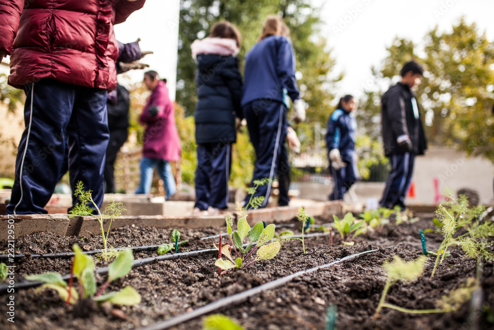 Fototapety, obrazy: School garden