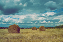 Straw Bales In Empty Field After Harvesting Time On A Background Of Dark Dramatic Clouds In Overcast Sky. Summer Country Scene.Style Of Old Film.