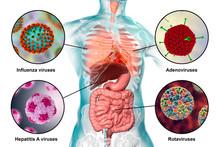 Human Pathogenic Viruses Causing Respiratory And Enteric Infections