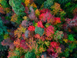 canvas print picture - Aerial Drone view of overhead colorful fall / autumn leaf foliage near Asheville, North Carolina.Vibrant red, yellow, teal, orange colors of the Hardwood trees in the Appalachian Mountains.