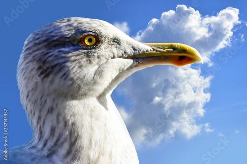 Fotografia, Obraz White seagull and blue sky