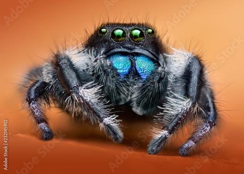 Photo sur Toile Croquis dessinés à la main des animaux Phidippus audax macro jumping spider