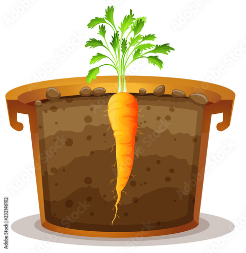 Staande foto Kids Carrot in pot half view