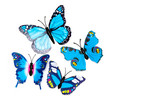 Group of multicolored tropical butterflies isolated on white background