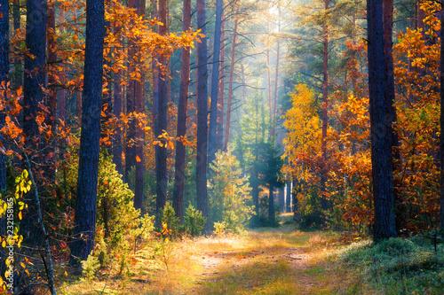 Fototapeten Wald Autumn forest