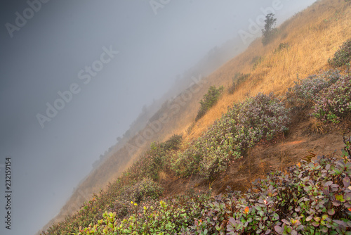 Foto op Canvas Donkergrijs misty in mountain at north Thailand