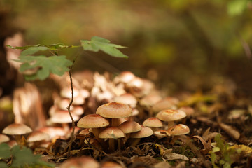 Beautiful small mushrooms growing in forest, closeup
