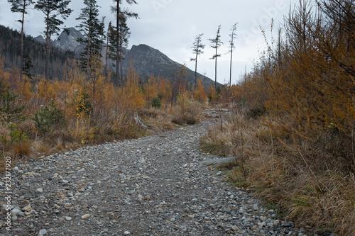 Foto op Plexiglas Weg in bos Górski szlak