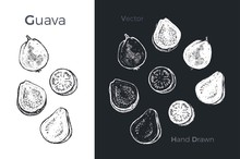Hand Drawn Guava Icons. Vector...