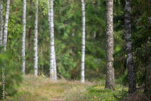 Garden Poster Forest Dark forest sunlight landscape
