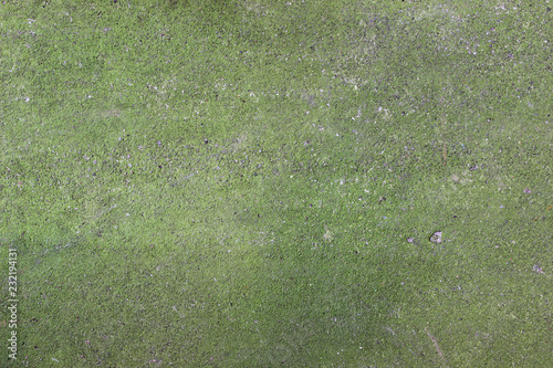 Moss concrete green ground texture surface - Buy this stock