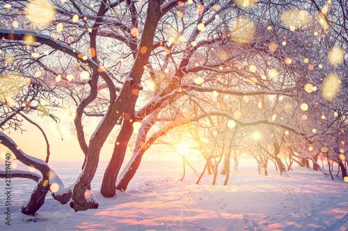 Foto auf Gartenposter Beige Christmas holiday background. Winter nature landscape in shining bokeh.