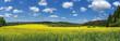 canvas print picture - Blühendes Rapsfeld in malerischer ländlicher Landschaft - Panorama