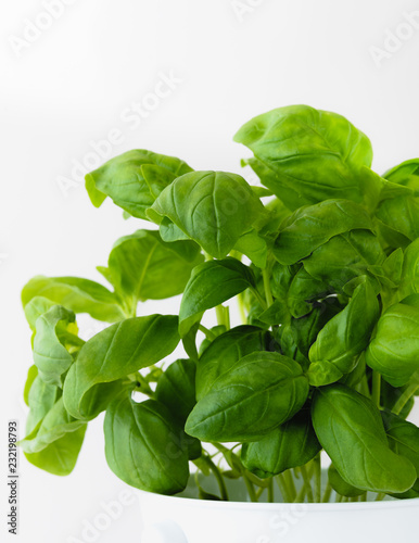 Fotografie, Obraz  fresh basil isolated on white background
