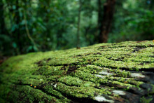 Fallen Moss Covered Log In Bea...