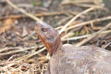 Portrait Of A Tortoise