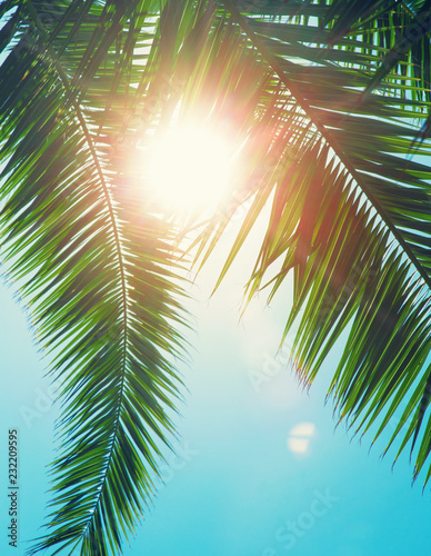 Photo Stands Turquoise Coconut tree on the sky background