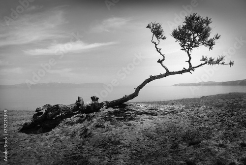 Poster Arbre Beautiful landscape with a lonely tree. Black and white landscape with a tree