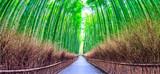 Fototapeta Bamboo - Bamboo forest  at Kyoto  landmark of Japan