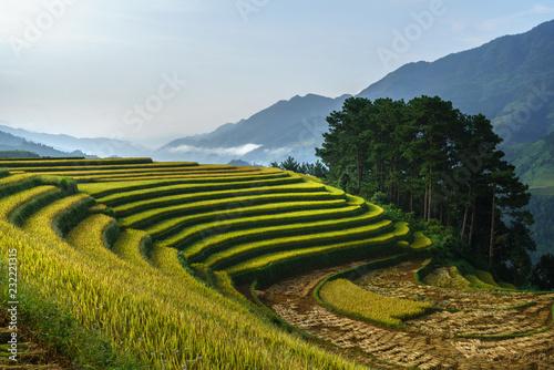 Fotobehang Rijstvelden Terraced rice field in harvest season in Mu Cang Chai, Vietnam.