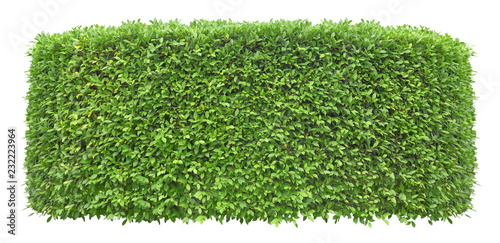 Aluminium Prints Garden Trimmed green hedge wall isolated on white background for exterior and garden design