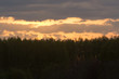 Beautiful sky with clouds and forest on horizon's line