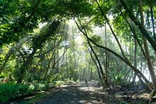 Sun Rays Shine Through Jungle Rain Forest In Osa Peninsula, Costa Rica