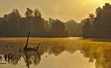 Scenic Marshland During Autumn Time