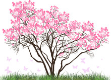 Pink Magnolia Blossom Tree In Green Grass
