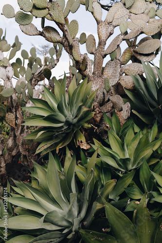 Staande foto Planten Botanical