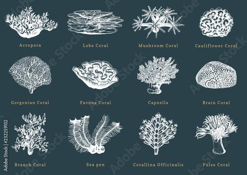 Vector illustrations of corals Wallpaper Mural