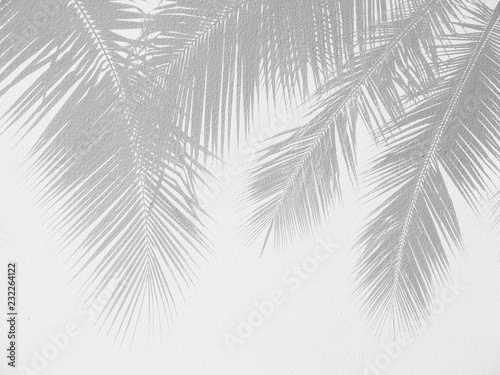 Fotobehang Historisch geb. Palm leaf shadows on a white wall