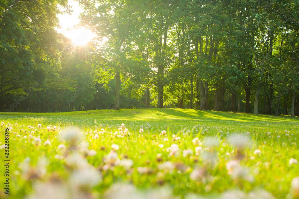 Fototapety, obrazy: blooming flowers , morning park