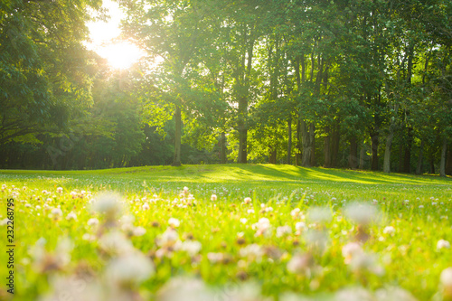 blooming flowers , morning park