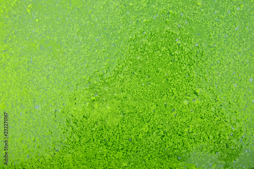 obraz PCV green water texture
