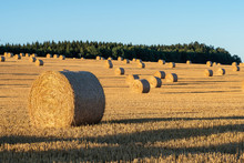 Hay Bales On The Field After Harvest. Agricultural Field. Hay Bales In Golden Field Landscape.