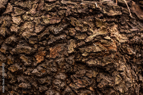 Photo full frame image of old tree trunk background
