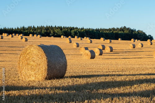 Valokuva Hay bales on the field after harvest