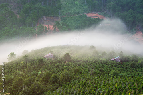 Fotobehang UFO Background with dense fog and magic light at the sunrise. The coffee farm and beautiful small houses in brilliant sunshine, best picture use for printing, advertising, design magazine and more