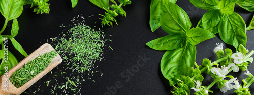 Photo sur Toile Condiment Fresh basil on a dark background. Green basil. Food background. A lot of basil. Long banner