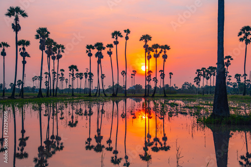 Sugar palm tree and sunrise in the morning ,Landscape silhouette, Reflecting light in the field during farmer sowing. Is a beautiful reflection in Pathum Thani ,Thailand