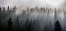 Misty Morning View In Wet Moun...